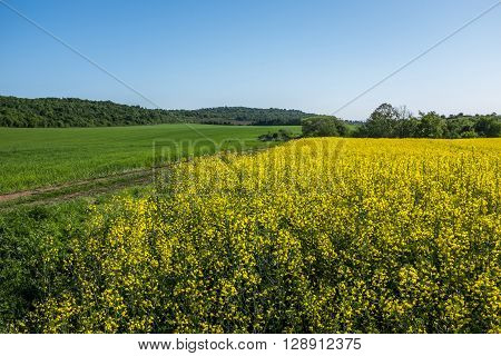 Nature landscape of farm fields and clear sky background