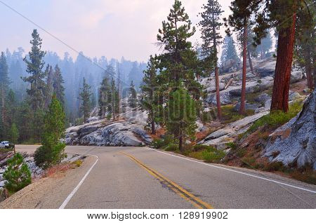 Morning drive through the foggy forest in Sequoia National park in California. ** Note: Visible grain at 100%, best at smaller sizes