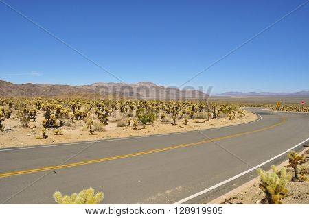 Empty road running through California desert in Joshua tree park