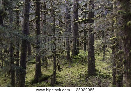 The Greenery of a Rain Forest in Kodiak Alaska