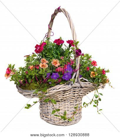 Colorful Spring And Summer Flowers In A Basket