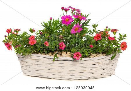 Daisies And Petunia Flowers In A White Basket.