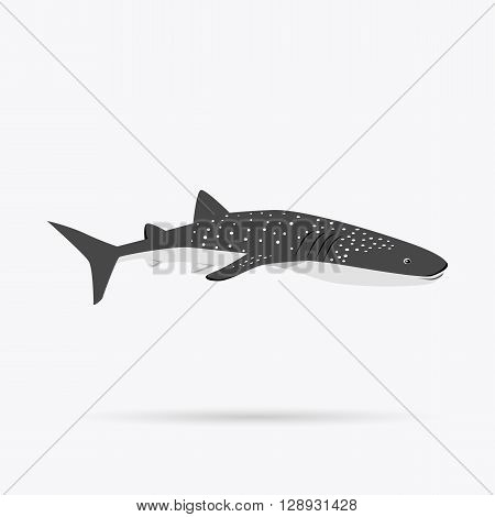 Marine predator shark design flat. Dangerous predator shark with fins and tail and sharp teeth. Aggressive fish tiger shark in black color living in the ocean or the sea. Vector illustration