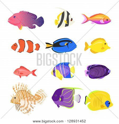 Set of sea fish color design flat. Ocean fish animal, nature cartoon wildlife aquarium, underwater life sea fish, exotic drawing marine fauna sea fish vector illustration