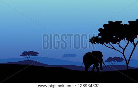 Elephant in fields scenery with blue backgrounds