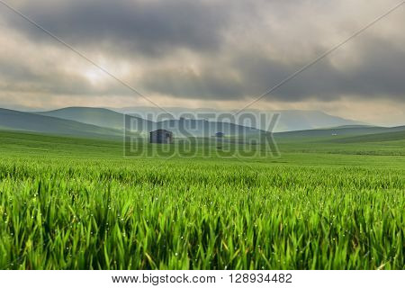 Between Apulia and Basilicata.Hilly landscape with corn field immature, dominated by clouds (Italy).In the background farmhouses shrouded in haze.