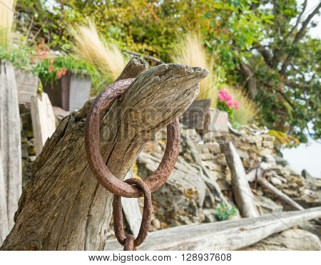 rusty metal ring with chain hooked on driftwood on the beach with rock, trees, grasses and flowers background