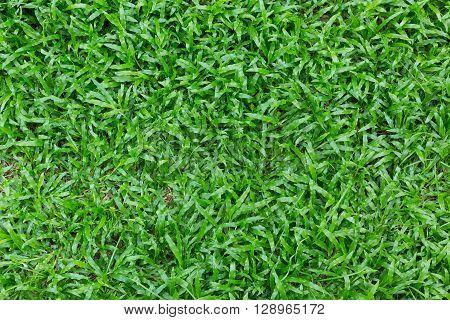 Green Grass Turf