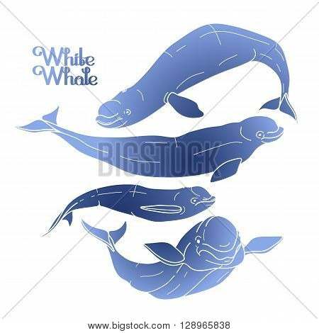 Graphic beluga whale collection. White whale. Sea creature isolated on white background.  Vector ocean mammal