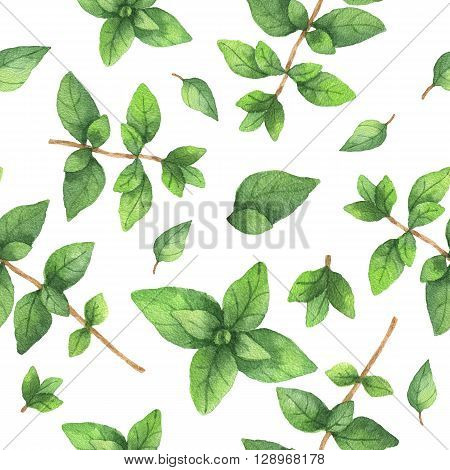 Watercolor seamless pattern hand drawn herb oregano. Watercolor leaves and branches of oregano on a white background. Herbs for packaging design, cards, postcards and book illustrations.