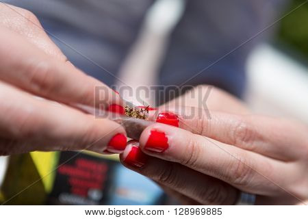 Unrecognizable woman with red nails making joint with rolling paper