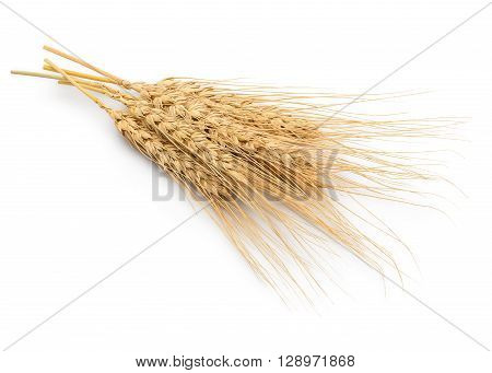 Dried Wheat Ear