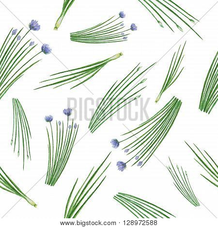 Watercolor seamless pattern hand drawn herb chives. Watercolor leaves and branches of chives on a white background. Herbs for packaging design, cards, postcards and book illustrations.