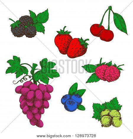 Flavorful wild forest and garden fruits sketch symbols with ripe red strawberries, raspberries and cherries, blueberries, purple grapes, blackberries and green gooseberries. Retro stylized berries for fruit dessert recipe or agriculture design usage