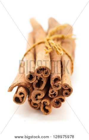 Top front view of Raw Organic Cinnamon sticks (Cinnamomum verum) bundle tied up with turmeric colored thread.