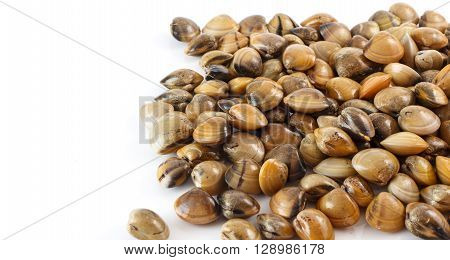 Raw seafood - group of clams on white background
