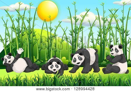 Four pandas in the field illustration