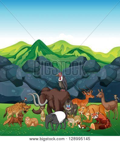 Wild animals in the field illustration