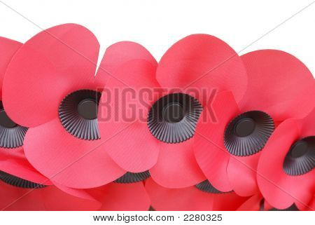 Poppies Of A Wreath In Remembrance Day