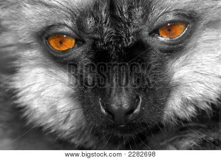 Lemurface