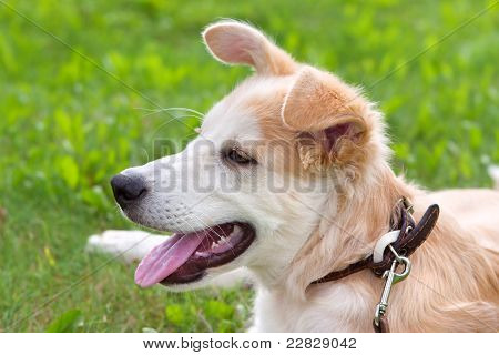 Puppy Lying On A Green Meadow