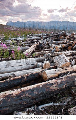 Dead Logs