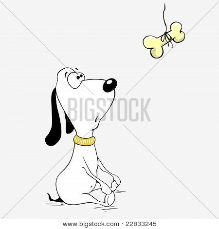 Cute dog is looking on the bone