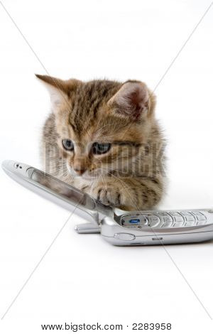 Striped Kitten With Mobile Phone, Isolated