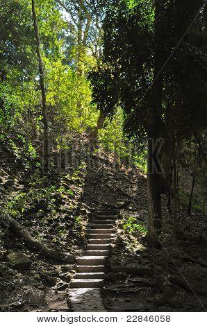 Jungle In Honduras