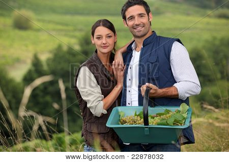 Attractive couple grapepicking