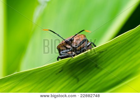 Brown Bug In Green Nature