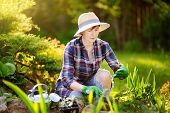 Portrait Of Smiling Beautiful Middle Age/mature/older Female Gardener. Woman Planting Seedlings In B poster