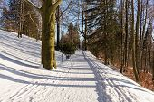 Winter Landscape. Snowy Winter Trees Along The Winter Park Under Falling Snow. Winter Snowy Scene Wi poster