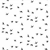 Vector Illustration Of Silhouette Of Birds. Seamless Pattern With Black Isolated Flat Contours Of Fl poster