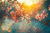 Spring blossom background. Beautiful nature scene with blooming tree and sun flare. Sunny day. Sprin poster