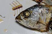 image of chub  - Chub mackerel fried in the kitchen coking in Thai food - JPG