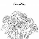 Vector Bouquet With Outline Carnation Or Clove Flower In Black, Bud And Foliage Isolated On White Ba poster