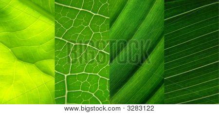 Leaf Collage Green