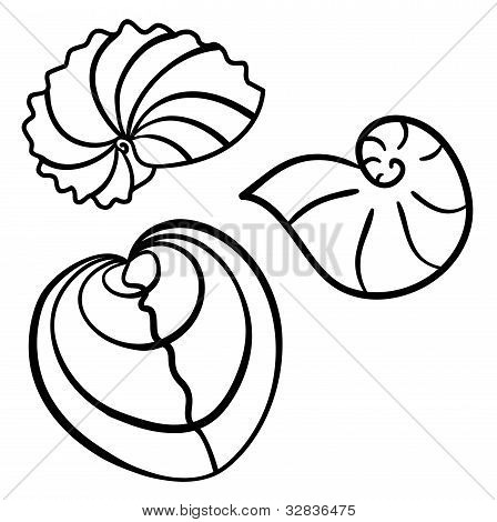 Set of beautiful cockleshells