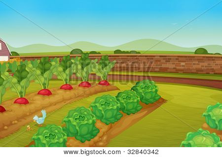 illustration of a vegie patch - EPS VECTOR format also available in my portfolio.