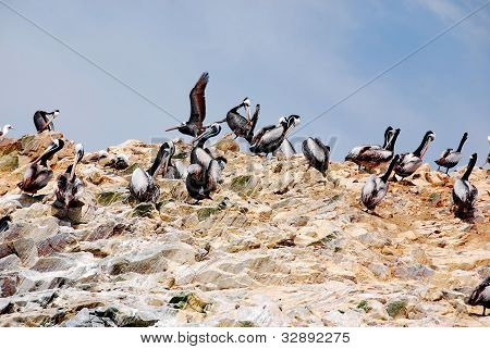 The Ballestas Islands