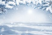 Winter Christmas Scenic Background With Copy Space. Morning Snow Landscape With Christmas Branches C poster