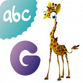 foto of g-spot  - G is for Giraffe - JPG