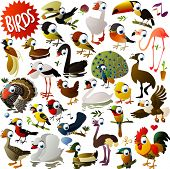 image of turkey-cock  - big vector birds set - JPG