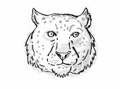Retro Cartoon Style Drawing Of Head Of A Snow Leopard, An Endangered Wildlife Species On Isolated Wh poster