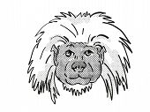 Retro Cartoon Style Drawing Of Head Of A Cottontop Tamarin , An Endangered Wildlife Species On Isola poster