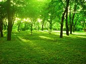 pic of tree leaves  - bright summer forest with green forest floor