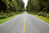 Empty road stretching out into the distance in New Zealand Forest