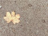 Brown, Wet Sand With A Yellow Leaf. There Is A Place For Text. Autumn Photo Of Wet Land With A Dry L poster