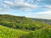 Autumn Countryside Vineyard Landscape Countryside With Cloudy Blue Sky poster